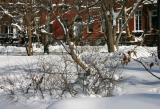 Winter Garden at Washington Square North