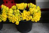 Bucket of Daffodils for Sale from a Street Flower Vendor