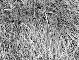 Weaving Grass - NYU Silver Towers Garden