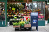 Flowers by Parcel Post