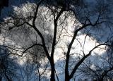 Elm Tree & March Sky