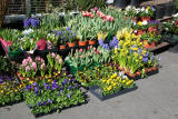 Spring Flowers for Sale