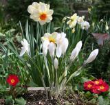 March 2006 Gardens