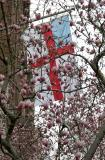 Magnolias at the Ascension Church
