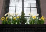 Daffodil Flower Box