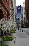 NYU Buildings