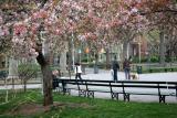 Park View - Flowering Crab Apple Trees