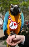 Polly Loves NY