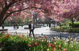 Spring in Washington Square Park