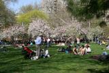Sun Bathers & Crab Apple Tree Blossoms