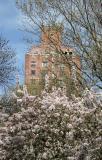 Crab Apple Tree Blossoms & NYU Residence Hall
