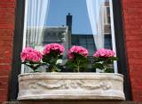 Hydrangea Window Garden