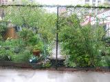 Garden View - Rainy Day