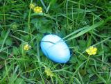 Leftover Easter Egg in a Nest of Buttercups