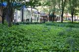 Garden View with Ivy Ground Cover
