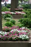 Impatiens Beds - NYU Silver Towers Gardens