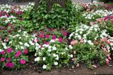 Impatiens & Ivy Bed - NYU Silver Towers Gardens