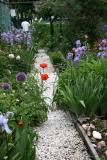 Poppies in the Garden Path