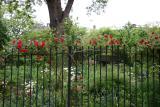 Climbing Roses & Garden View