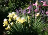 Iris, Sage & Peony Blossoms