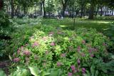 Garden Area -  Spirea Bushs in Bloom