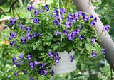 Violets in a Pear Tree Basket