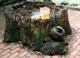 Tree of Knowledge - Oak Tree Stump