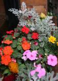 Impatiens & Senecio Flower Box - Dojo Restaurant