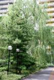 Pine & Willow Trees