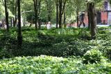 LaGuardia Place Gardens