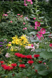 Yellow Lilies, Hollyhocks, Red Bee Balm & Roses