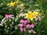 Echinacea, Lilies & Roses