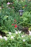 Garden View - White Goosenecks & Red Salvia