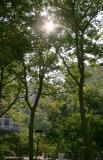 East Garden View