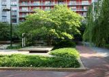 Dogwood Tree - North Garden View