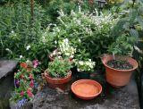 Bird Bath Potted Flower Arrangements