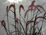 NYU Sidewalk Garden - Grass