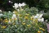 Garden View - Casablanca Lilies & Blackeyed Susans