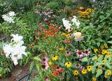 July 2006 Gardens