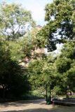 Scholar Trees & Judson Church