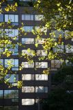 Sycamore Foliage & Mercer Street Residence