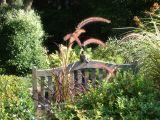 Robin Catching the Sun on a Garden Bench