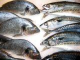 Chubs & Mackerel - Citarelli Seafood & Gourmet Market
