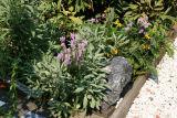 Corner of a Garden Plot