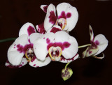 My Neighbors' Orchids