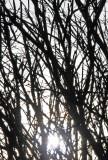 Burning Bush & Rising Sun