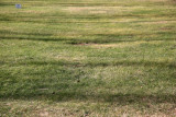 Shadows on Grass