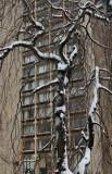 Beech Tree & NYU Silver Tower Residence