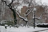 Garden View - Cherry Trees