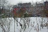 Garden View - Rose Bushes
